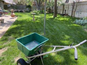 Weed Control OKC Lawn Care Oklahoma city Lawn Treatments OKC Fertilizing